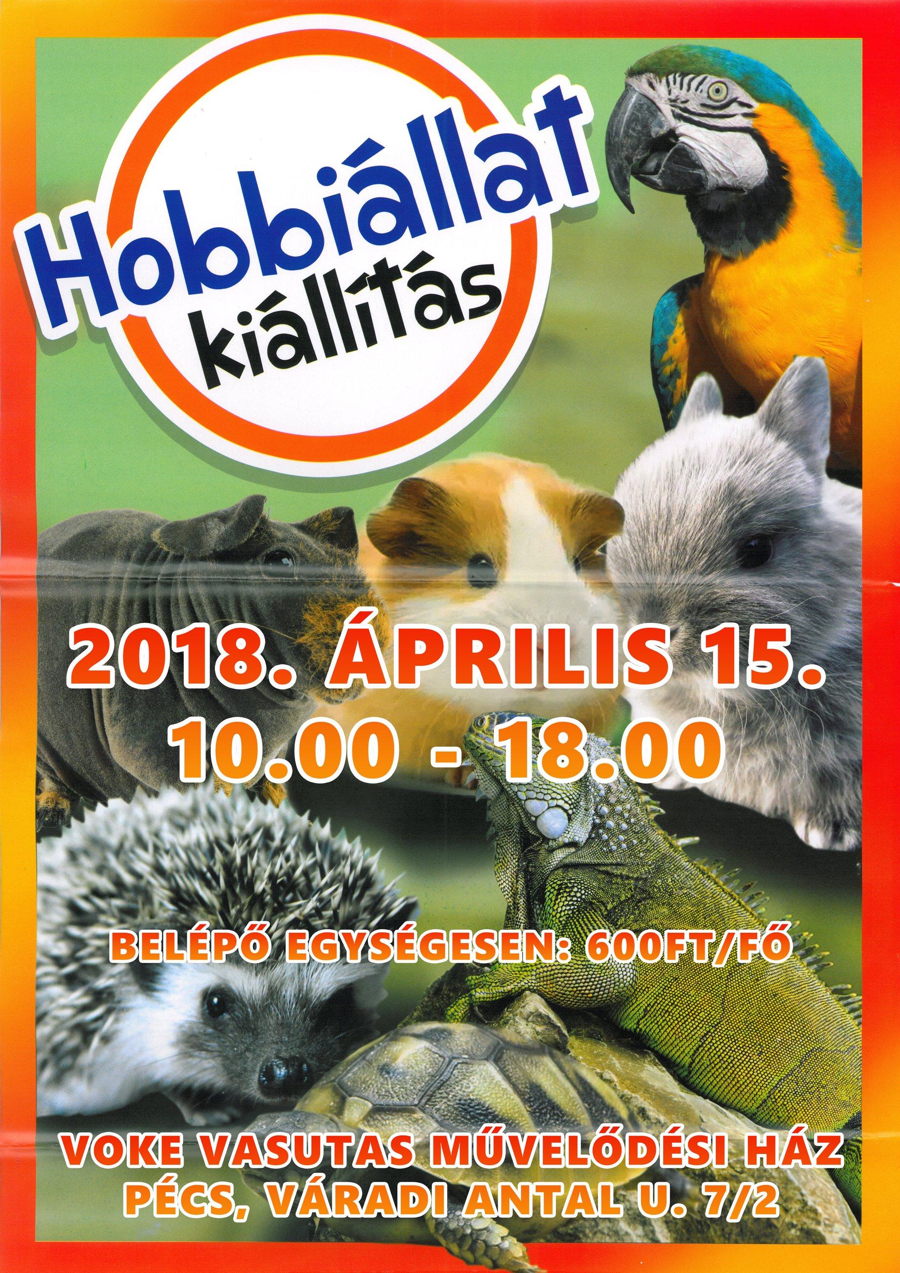 Hobbiállat kiállítás Pécsett a Vasutasban