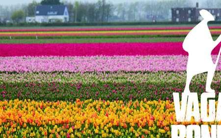 Vagabond Természetbarát Egyesület: Kerékpárral a tulipánok földjén